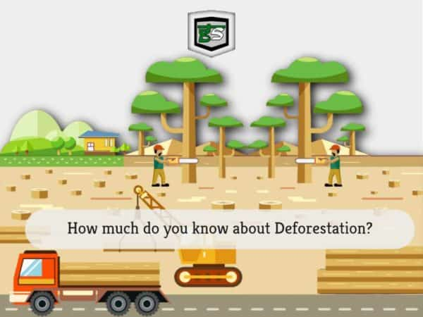 Deforestation by GreenSutra | Mumbai | India